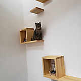 猫と暮らすための家づくり